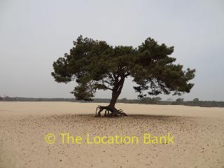 Location 1517